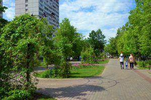 Специалисты планируют озеленить район. Фото: Анна Быкова