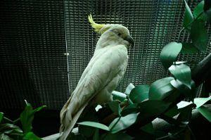 Москвичи чаще всего из экзотических животных выбрасывают змей, игуан и попугаев. Фото: Анна Быкова