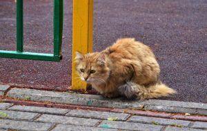 Московский зоопарк проведет лекции о помощи бездомным животным. Фото: Анна Быкова