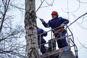 Cеминар по обрезке деревьев провели в Центральном округе. Фото: Денис Кондратьев