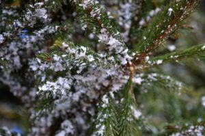 Жители района смогут сдать новогоднюю елку в специальные пункты приема. Фото: Анна Быкова