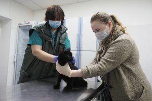 ВОЗ считает необходимым начать выборочную диагностику животных на коронавирус. Фото: Антон Гердо, «Вечерняя Москва»