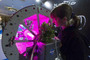 Технологическую арт-выставку открыли в районной галерее. Фото: Сара Зицерман, «Вечерняя Москва»